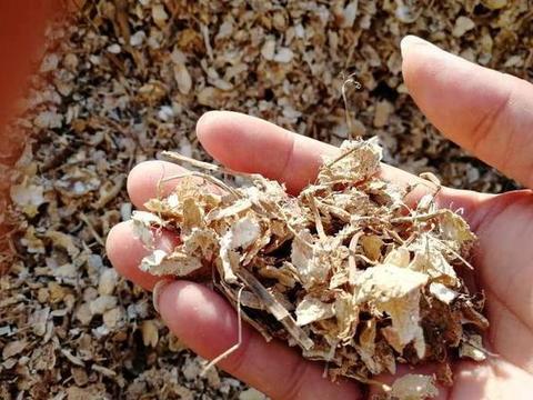 吃剩的坚果壳如何处理好?3步简单操作,废物、垃圾变成养花宝