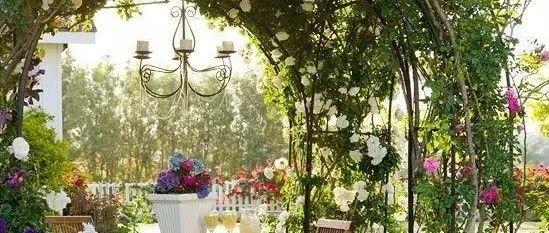 搭一座藤架,美一个院子