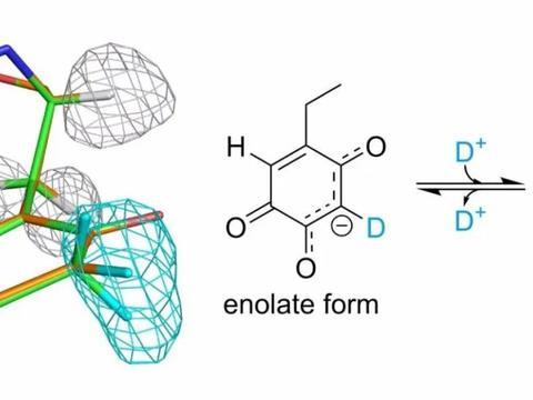 太好了,利用中子晶体学:揭示了氧化酶蛋白的高分辨率结构细节!