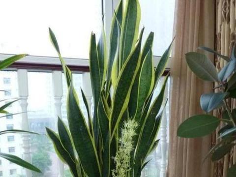 3种花超好养,长的葱葱郁郁,净化空气超厉害,空气清新好睡眠