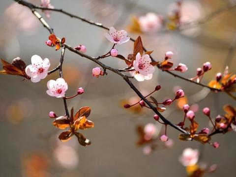 下个月之内,缘分和桃花始料未及,收获爱情步步惊心的四大生肖!