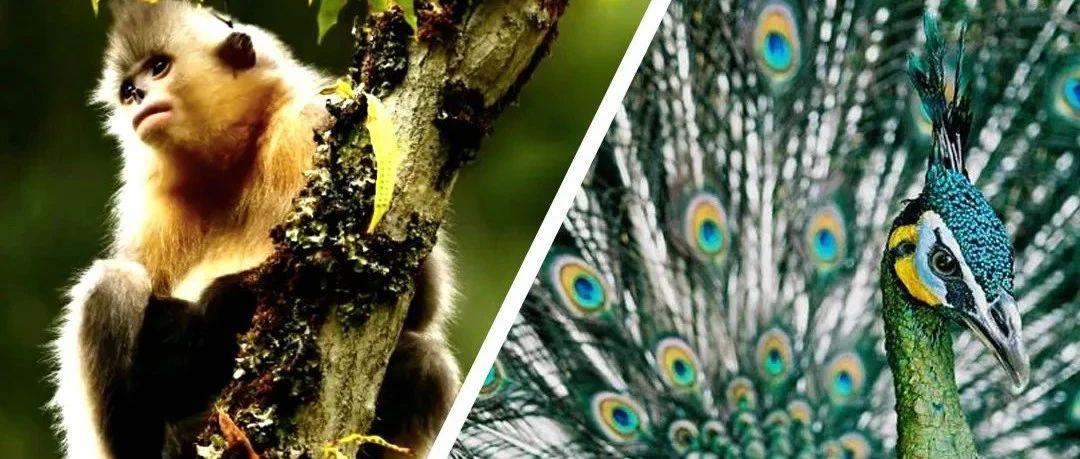 讲座信息|张伯驹眼中的野生动物保护故事