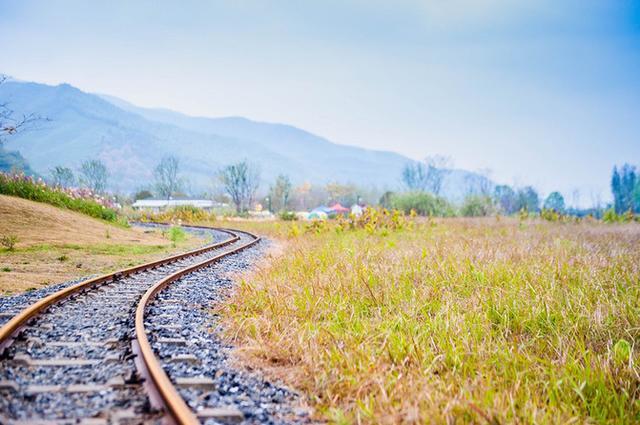 江浙沪周末的好去处,蒸汽小火车载你环游花海,超适合拍文艺照片