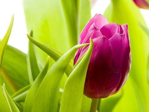 6月8号,运势紫气东来,财喜进家门,事业欣欣向荣的3生肖
