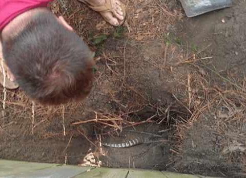 大哥后院冒出奇怪小洞, 揪出的东西让他不淡定了,是个犰狳