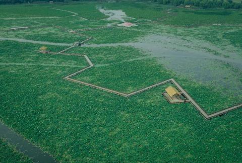淮南最美赏荷胜地 千亩荷花淀50多个品种相继盛开