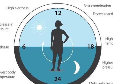 拔根头发,研究人员就可以测出你的昼夜节律