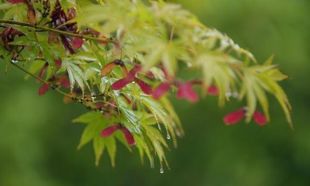 空山新雨后,天气晚来秋——王维《山居秋暝》