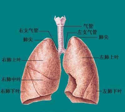 第一癌症肺癌有哪些原因?医生提醒:5项措来预防,5项检查确诊