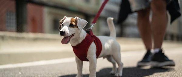 9月1日起!聊城市养犬管理条例正式实施