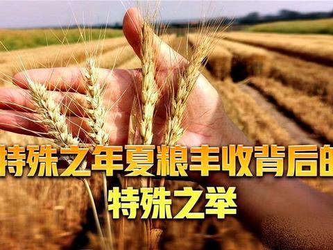 芮城刷新山西省水地小麦亩产纪录