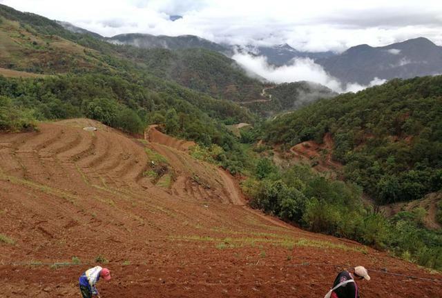 景谷:安海群众抓住雨后墒情抢种玉米