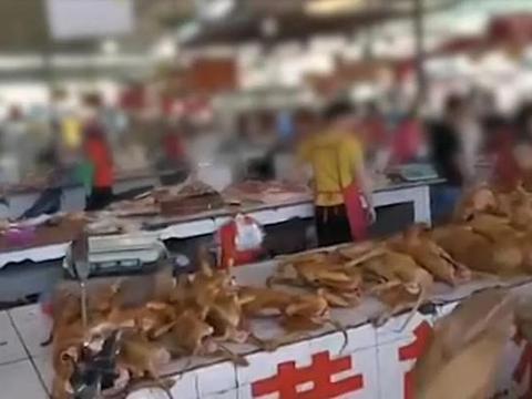 6月21日广西玉林狗肉节如期举行?国际动保组织救出10只小狗
