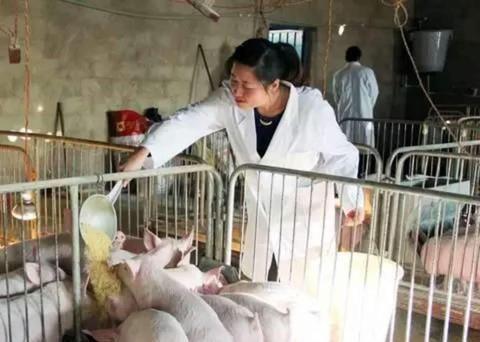 猪价上涨乏力拐点将至,下半年猪肉价格会回到20元吗?你怎么看?
