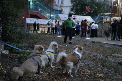 18日下昼,三只小狗被栓在四周栅栏边,等着主人列队领号返来。《中国谋划报》记者郝成摄