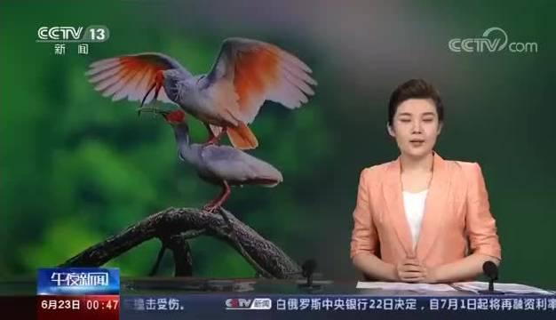 近日,陕西省林业局发布《朱鹮保护成果报告》。截至目前……