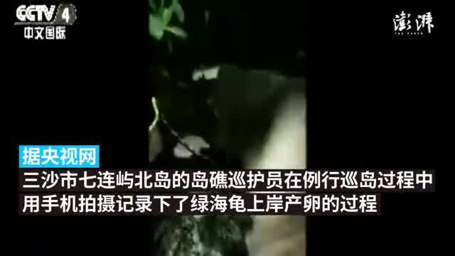 海南三沙今年首次拍到绿海龟上岸产卵