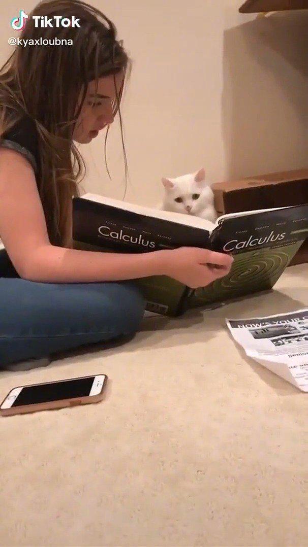 热心的主人给猫咪讲微积分…… 猫:???