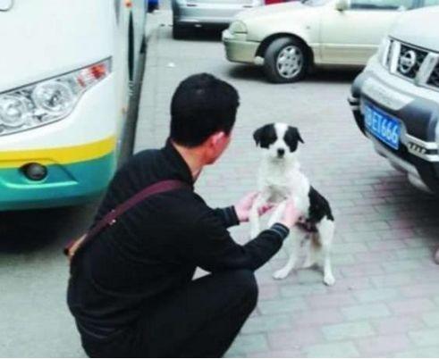 男子好心喂养流浪狗,却没想到流浪狗竟用这种方式来报恩!