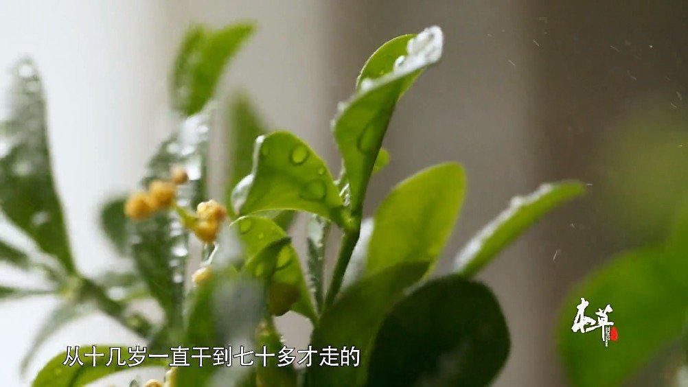 纪录片《本草中国》 第七集 新生 解密抗疟新型药青蒿素的科研之