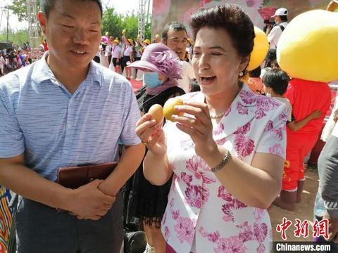 """""""中国第一大杏园""""开启采摘季 杏比鸡蛋大"""