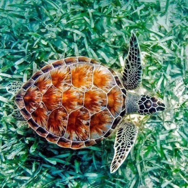 萌翻!海南三沙今年首次拍到自然孵化的绿海龟