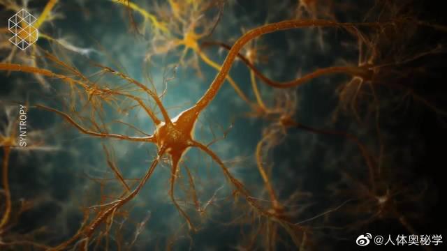 神经元的结构组成 神经元是一种特殊的细胞……