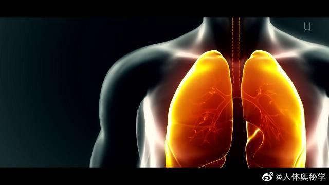 哮喘 支气管哮喘(Bronchial Asthma,简称哮喘)……