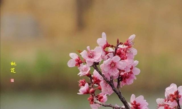 书法名家陆启成,楷书写唐伯虎《桃花庵歌》,美的像花一样