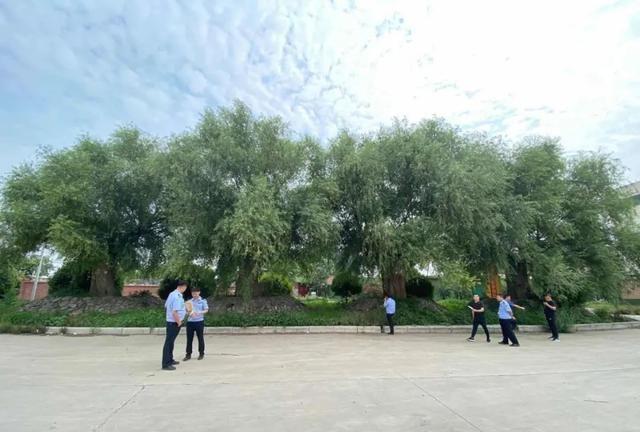 公司欠款数百万河南辉县某生态植物园园林景物被查封