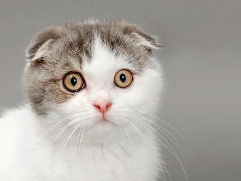 猫吃盐酸赛庚啶片增食欲
