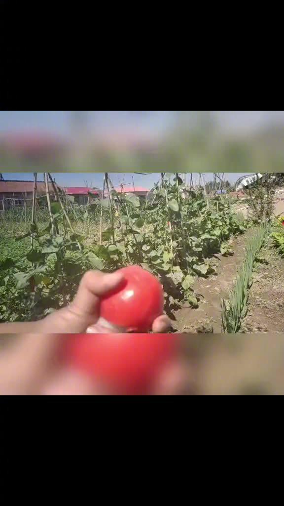 这是切到番茄的大动脉了 我与阁下无冤无仇 为何拿我们当傻子