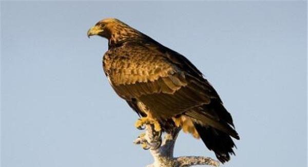 地球上最危险的十大鸟类,以食火鸡和猎鹰为首,你见过吗?