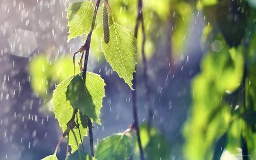 养花浇水必不可少,用不同类型的水养花,技巧方法各不同