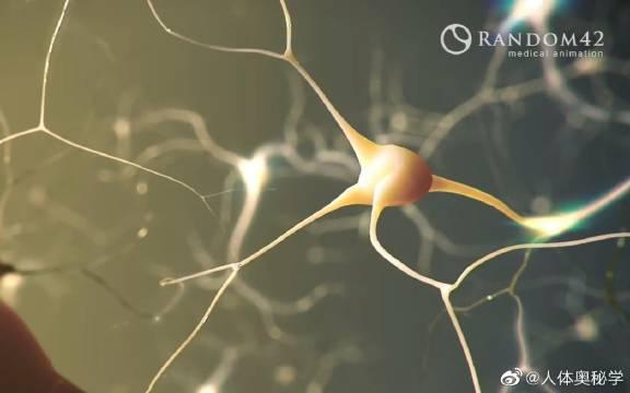 癫痫的发生原理 癫痫是大脑神经元突发性异常放电……