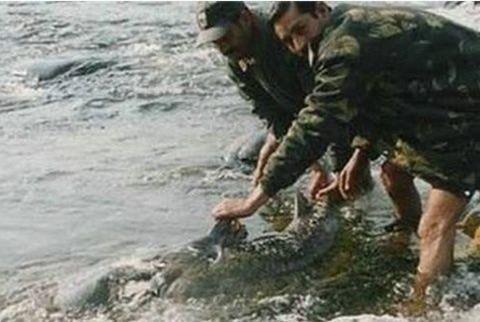 """印度长期水葬导致""""食人水怪""""巨型鲶鱼对人肉产生兴趣"""