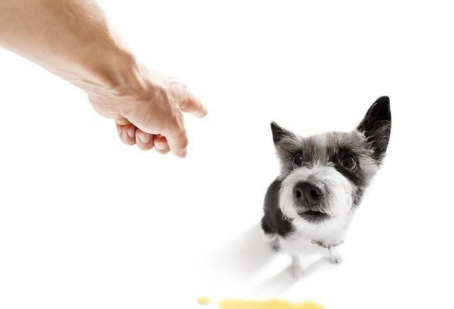 狗狗到底能不能吃盐?关于这一点现在给你答案