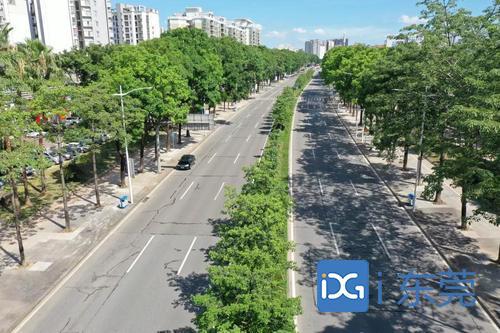 增设人行天桥、上线智慧停车、升级绿化景观……莞城交通出行迎来新变化