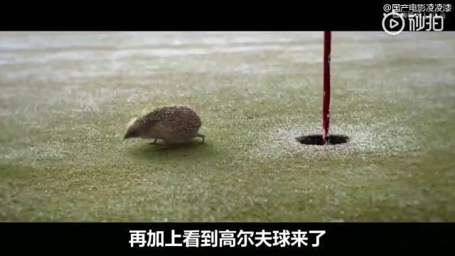 各种小动物的几十种死法,人类无意间的举动就可能误伤小动物!