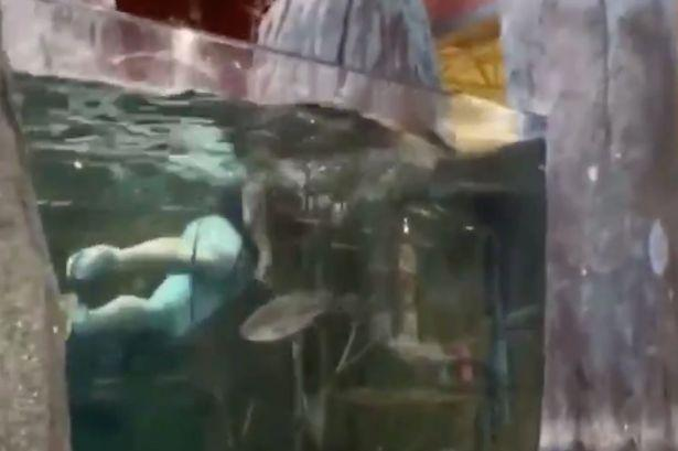 为实现自己对粉丝的承诺,美国网红小哥一头扎进水族箱游泳