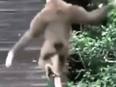 """男子野外发现大猩猩扶手上练习""""大鹏展翅"""", 细看后拍下这画面"""