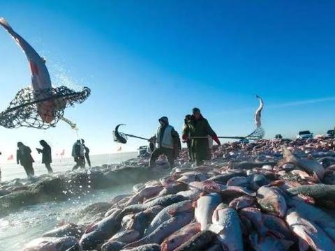 查干湖每年冬捕千吨大鱼,湖里的鱼取之不竭?主要有这三个原因