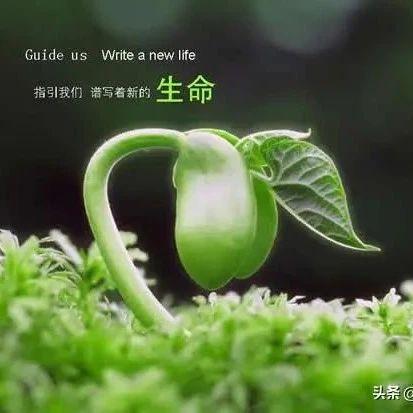 生命教育和挫折教育是今天中国式家庭教育的严重缺失