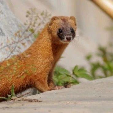 【最新】上海第5个!青浦区全区域划定为野生动物禁猎区