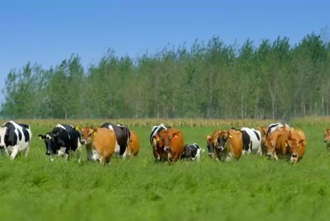 免疫力提升时代,辉山乳业健多士牛奶给你更多呵护!