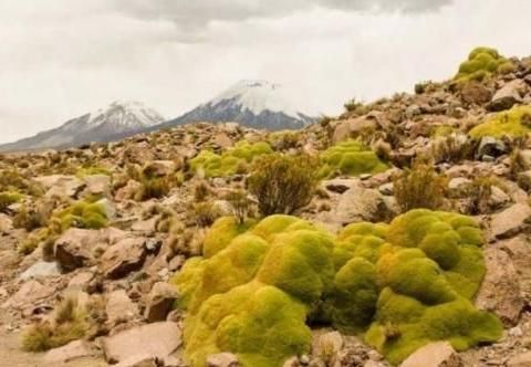 继珠穆朗玛峰变绿之后,南极1679块区域也变绿了,今年怎么了?