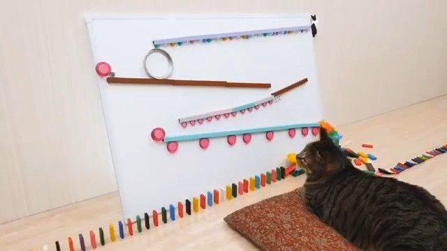 一场由猫咪启动的多米诺骨牌!环环相扣,设计巧妙……