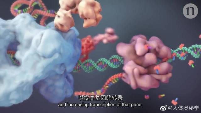 """CRISP基因编辑技术 因编辑技术指能够让人类对目标基因进行定点""""编辑"""""""
