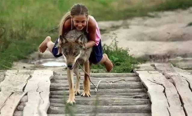"""俄罗斯9岁""""小魔女""""养恶狼当宠物,5年后竟发生巨大变化!"""