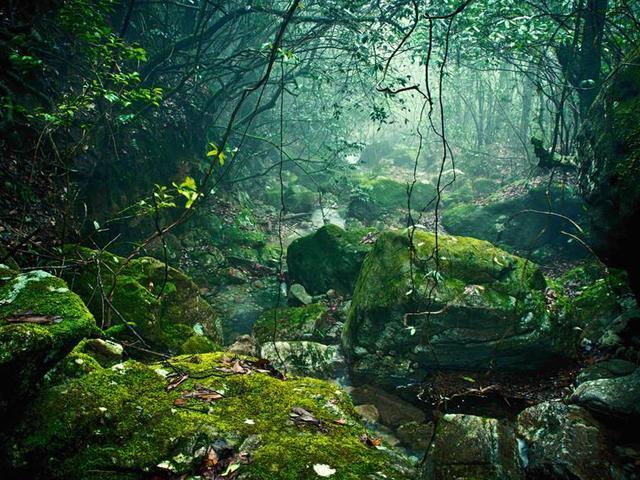 """温州3大绝佳避暑胜地,气候温和湿润,堪称大自然的天然""""空调"""""""